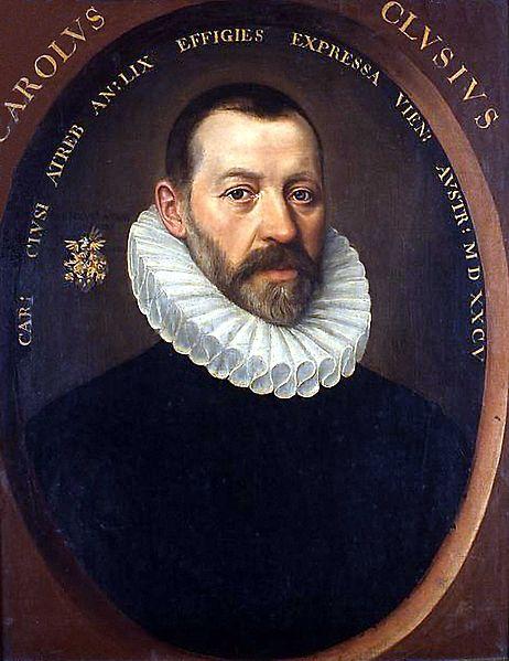 https://fr.wikipedia.org/wiki/Fichier:Carolus_Clusius00.jpg